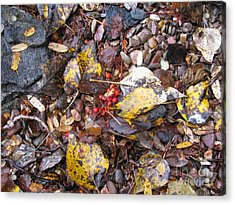 Rocks And Berries Acrylic Print by Leone Lund