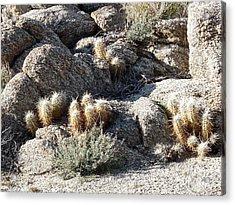Rocks And Cactus Acrylic Print by Deborah Smolinske
