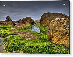 Rocks And Seaweed Acrylic Print