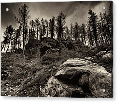 Acrylic Print featuring the photograph Rocks And Trees And Trees And Rocks by Trever Miller