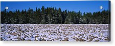 Rocks In Snow Covered Landscape Acrylic Print by Panoramic Images