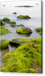 Rocks Or Boulders Covered With Green Seaweed Bading In Misty Sea  Acrylic Print by Dirk Ercken