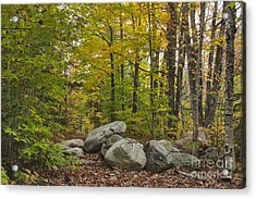 Rocky Forest Path Acrylic Print