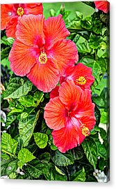 Rocky Hill Hibiscus Acrylic Print