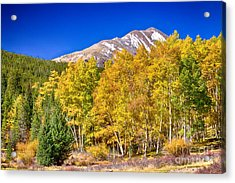 Rocky Mountain Autumn Bonanza Acrylic Print by James BO  Insogna