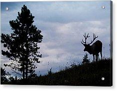 Rocky Mountain Bull Elk At Dusk Acrylic Print by Ken Archer