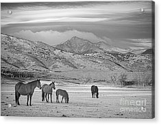 Rocky Mountain Country Morning Bw Acrylic Print by James BO  Insogna