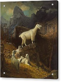 Rocky Mountain Goats Acrylic Print by Albert Bierstadt