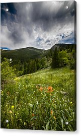 Rocky Mountain Meadow Acrylic Print