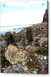 Rocky Shore Acrylic Print by Dancingfire Brenda Morrell