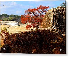 Rocky Tree Acrylic Print by David  Norman