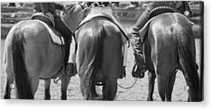 Rodeo Bums Acrylic Print by Michelle Wrighton