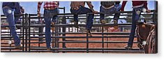 Rodeo Fence Sitters Acrylic Print