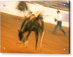 Rodeo Acrylic Print by Paulette Maffucci