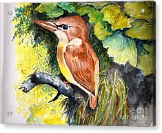 Acrylic Print featuring the painting Rofous - Backed Kingfisher  by Jason Sentuf