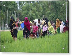 Rohingya Muslims Flee Violence In Myanmar Acrylic Print by Suvra Kanti Das