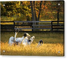 Acrylic Print featuring the photograph Roll In The Hay by Joan Davis