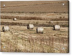 Roll On The Hay Acrylic Print