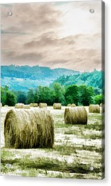 Rolled Bales Acrylic Print by Mick Anderson
