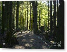 Rolley Lake Trail Acrylic Print