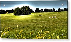 Rolling Pastures Acrylic Print