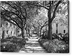 Rollins College Landscape Acrylic Print by University Icons