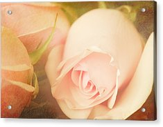 Romance Acrylic Print by Dick Wood