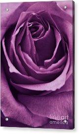 Romance IIi Acrylic Print