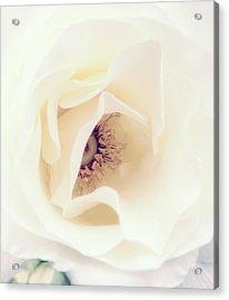 Romance In A Rose Acrylic Print