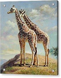 Romance In Africa - Love Among Giraffes Acrylic Print by Svitozar Nenyuk