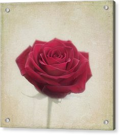 Romance Acrylic Print by Kim Hojnacki