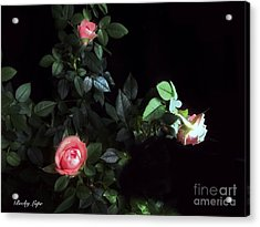 Romance Of The Roses Acrylic Print by Becky Lupe