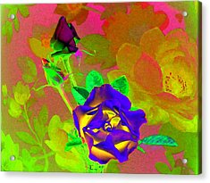 Romancing The Rose Acrylic Print by Will Borden