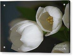 Romantic White Acrylic Print by Carol Lynch
