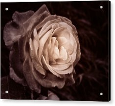 Romantica Acrylic Print by Mary Zeman
