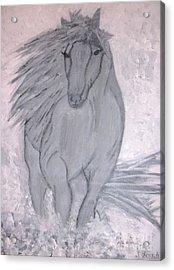 Romeo The White Stallion Acrylic Print