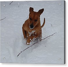 Romp In The Snow Acrylic Print by Mim White