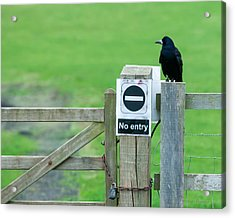 Rook On Guard Acrylic Print