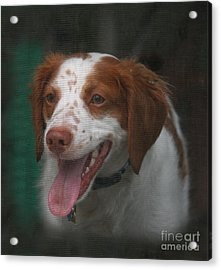 Rooney At The Back Door Acrylic Print