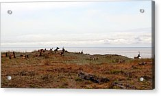 Roosevelt Elk And The Ocean Acrylic Print