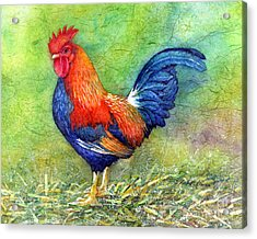 Rooster  Acrylic Print by Hailey E Herrera