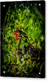 Rooster In A Tree Acrylic Print