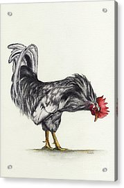 Rooster Acrylic Print by Nan Wright