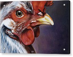 Rooster Acrylic Print by Natasha Denger