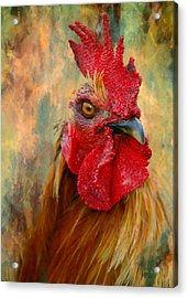 Rooster On The Loose - Abstract Realism Acrylic Print