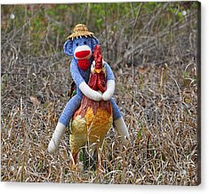 Rooster Rider Acrylic Print by Al Powell Photography USA