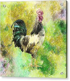 Rooster Acrylic Print by Taylan Apukovska