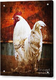 Rooster With An Attitude Acrylic Print