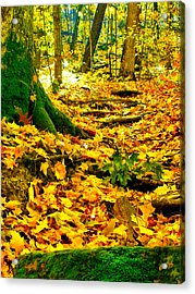 Acrylic Print featuring the photograph Root Steps by Zafer Gurel