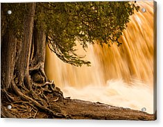 Rooted In Spring Acrylic Print